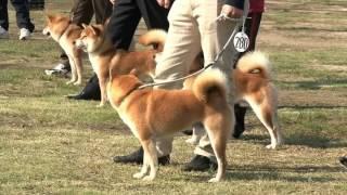 第110回日本犬全国展覧会ダイジェスト映像.