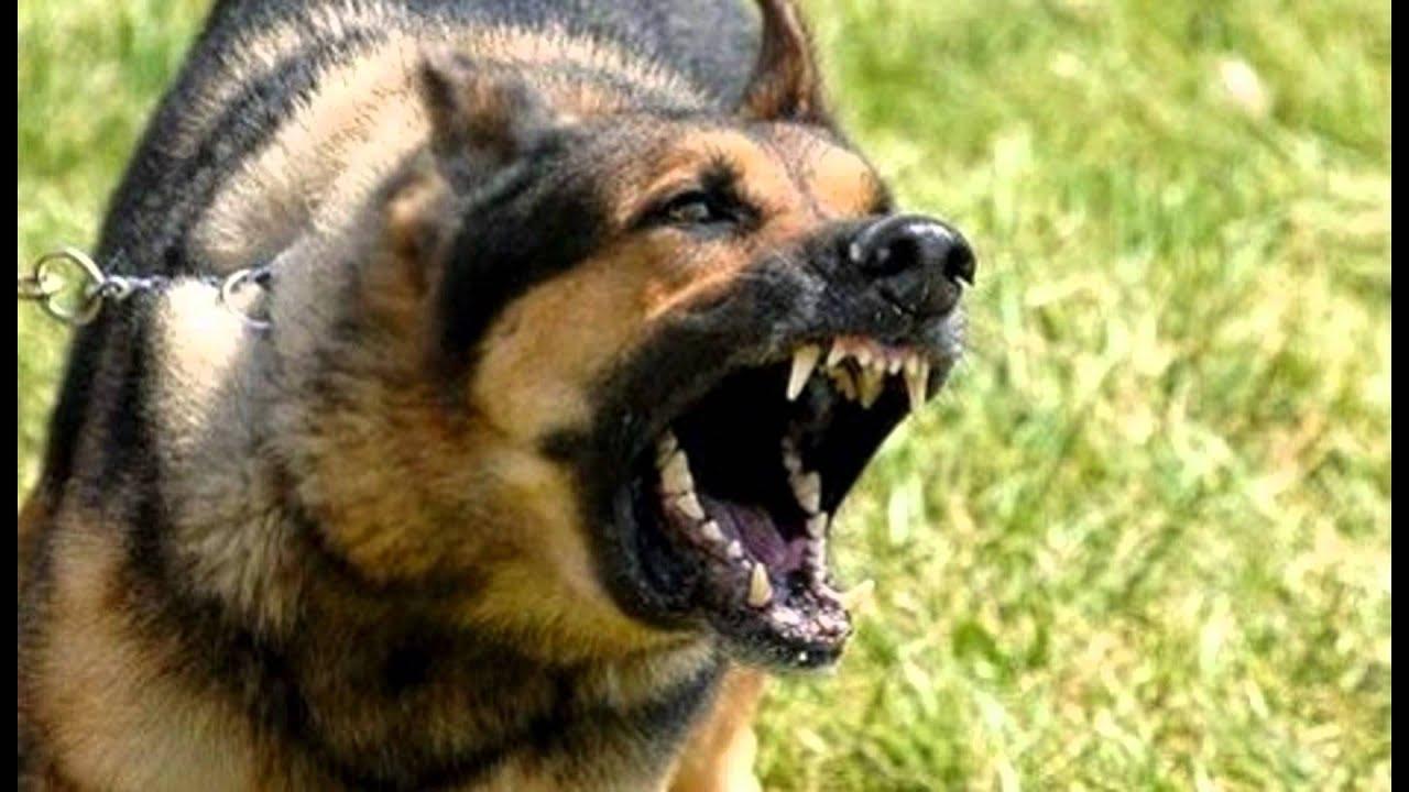 Stop Aggressive Dog Behavior