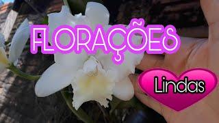 ORQUÍDEAS QUE ABRIRAM HOJE AS FLORES Belíssimas BEAUTIFUL ORCHIDS