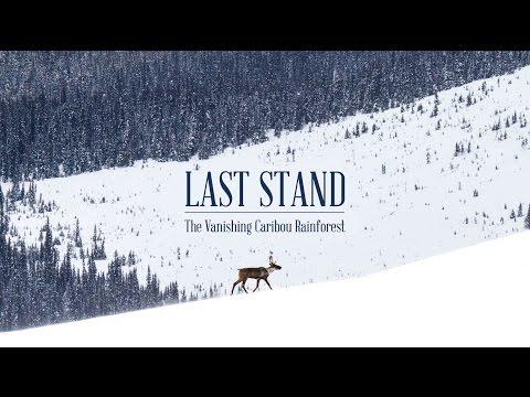 Last Stand (Trailer) - The Vanishing Caribou Rainforest