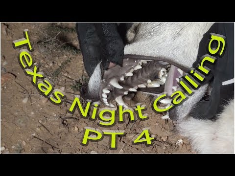Texas Nights-  Coyotes calling and Predator hunting part 4 in Texas with Optical Dynamics