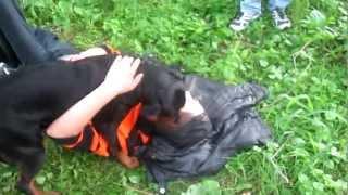 Любовь собаки и человека)))