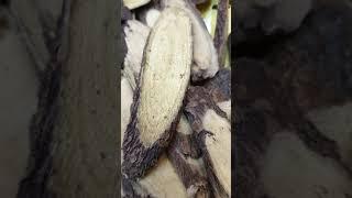 경동 건강원 닭발 (오공) 우슬즙 한솥 올립니다