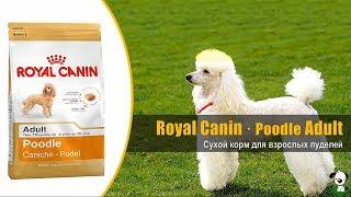 Корм для взрослых собак породы пудель · Royal Canin Poodle Adult