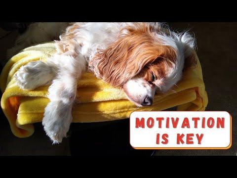 Positive Dog Training Tips   Cavalier King Charles Spaniel Training Tips, Motivating Your Dog