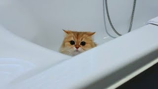 Cats Play Hide And Seek