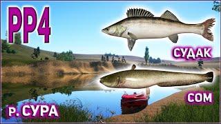 РР4 СУРА СУДАК РУССКАЯ РЫБАЛКА 4 СУРА СОМ RUSSIAN FISHING 4 SURA RIVER ZANDER CATFISH