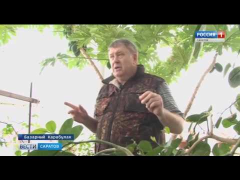 Житель Базарного Карабулака организовал у себя дома оранжерею
