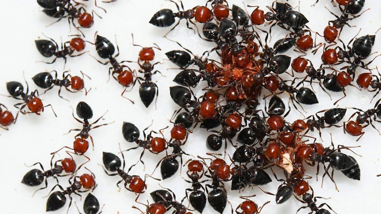 Dealing with ants in your house? Use this trick to make them disappear! Genius Ways to Get Rid of AN