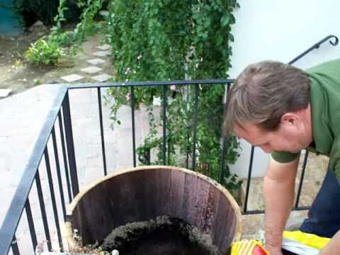 Barrel Gardening Lemon Tree Planting Part 1mov Youtube