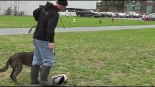 Cato Controlled Aggression Training 004