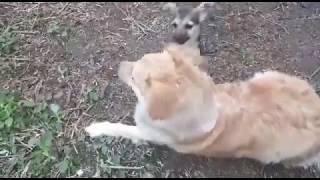 Как назвать собаку?  Которая мелкая :)