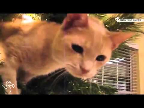 Cats Knocking Over Christmas Trees