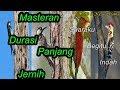 Kumpulan Masteran Burung Pelatuk Joss Gandos Suara Jernih Rapat  Mp3 - Mp4 Download
