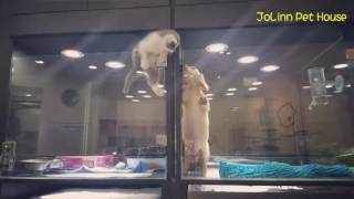 ������� ����� � ����� Cute Kitten Escapes Cage to Play With Puppy