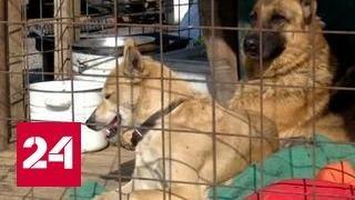 В Кемерове возбуждено уголовное дело о поджоге в приюте для животных