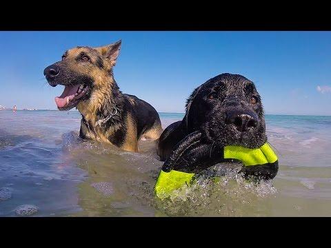 500 DOGS ON A BEACH