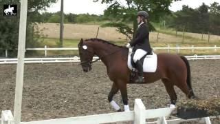LB2 Hest
