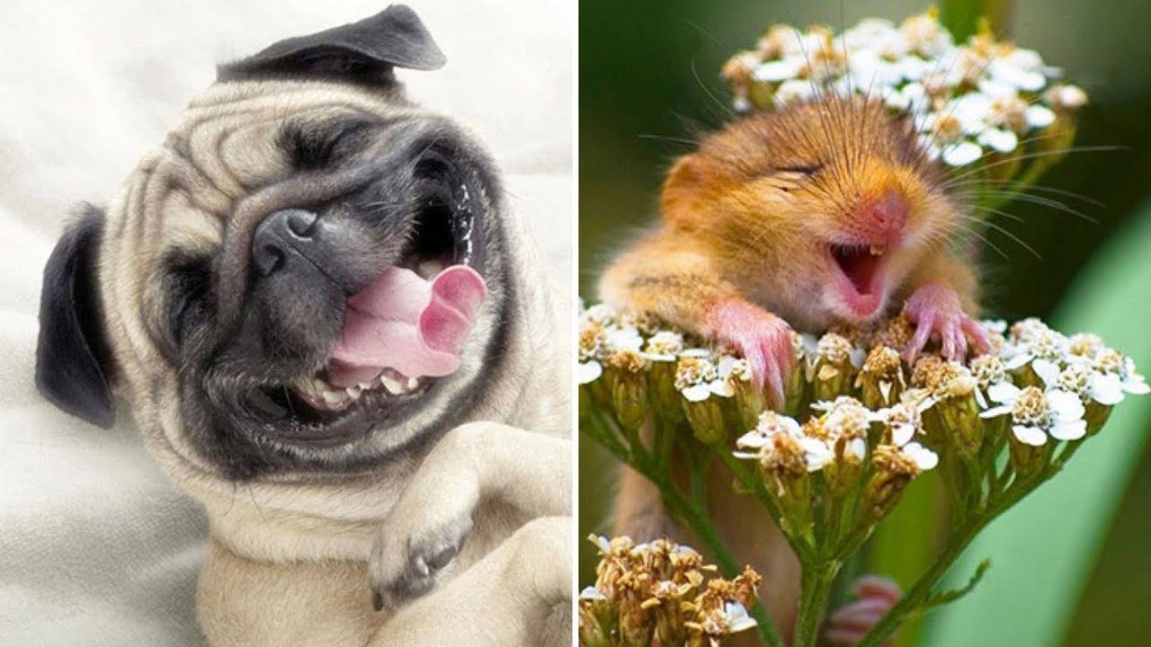 картинки смеются животные работы