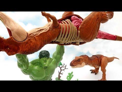Tyrannosaurus Rex Dinosaur VS Hulk! Dinosaur Anatomy Fun Video For Kids 화난 헐크 공룡 대결