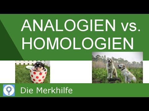 analogien und homologien nachweis von homologien systematik der tiere evolution 20 youtube. Black Bedroom Furniture Sets. Home Design Ideas