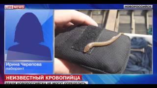 Экзотический паразит почти год жил в теле девочки из Новороссийска