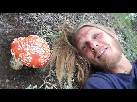Wild Amanita Muscaria!!! Wild Magic Mushroom :P