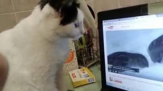 Ума смотрит кино для кошек.