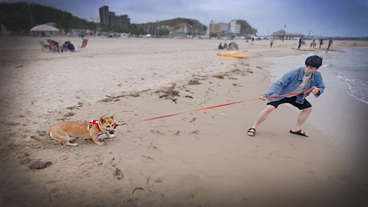 바다가 무서운 강아지