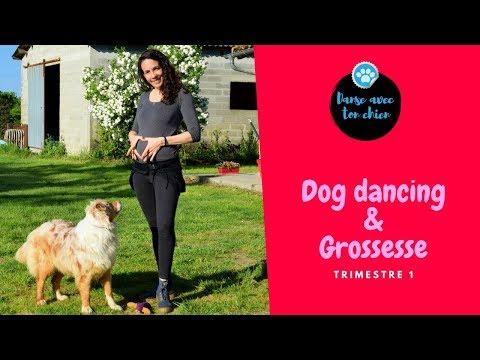 Dog Dancing et Grossesse : Retour sur le 1er trimestre!