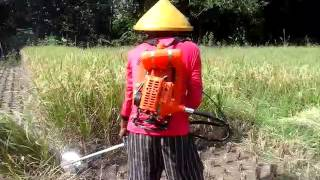 mesin pemanen padi milik ateng