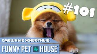 СМЕШНЫЕ ЖИВОТНЫЕ И ПИТОМЦЫ #101 АВГУСТ 2019 | Funny Pet House