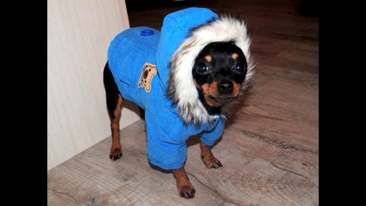 Куртка зимняя для собаки той-терьер с AliExpress Unboxing
