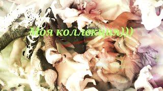 Моя коллекция качественных фигурок/Собаки, лисы и волки/collecta, schleich, papo, MOJO/