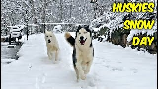 Huskies Snow Day (Then vs Now)