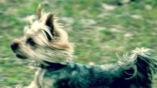 Тоша конкур) собаки-лошади, прыжки