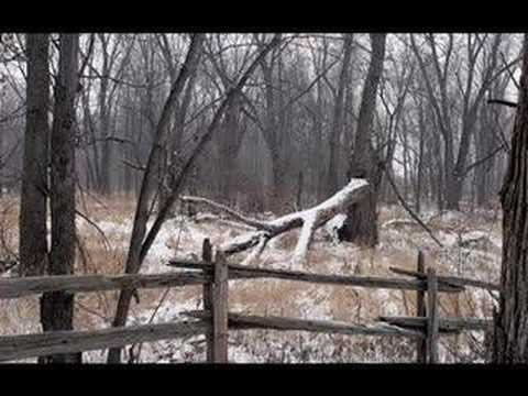 Клип Woodpigeon - Oberkampf