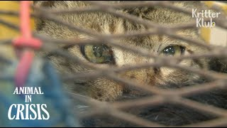 Hunted Stray Cats Drool In Fear Waiting For Their Turn To Be Boiled (Part 1)   Animal in Crisis EP87