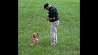 Watermark's Danger PLUS how many times/day should you train your puppy with Bill Hillmann