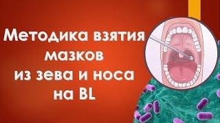 Методика взяття мазків із зіву і носа на BL