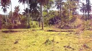 10.7 Hectares Farm Land in San Miguel, Bohol (FOR SALE)