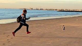 ロスのビーチの夕日に感動しカモメを全力で追いかける心の透き通った少年 thumbnail