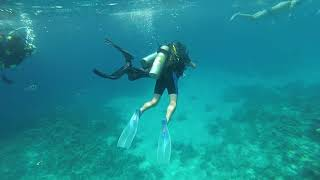 Египет 2020 Рыба Наполеон Hilton Sharks bay Egypt