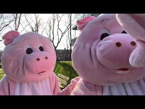 * 🐷 CARE FOR EACH OTHER 🐷 *