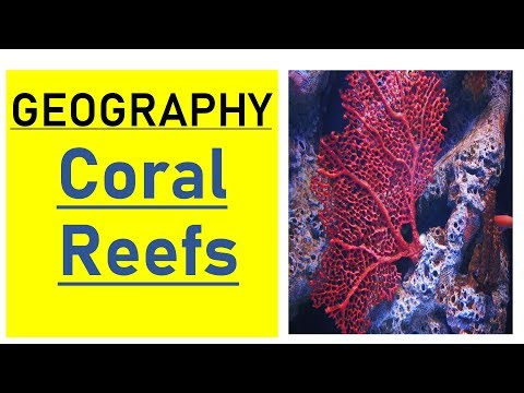 Lecture - 12 - Coral Reefs