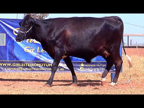 LOTE 51   0591BS