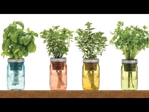 9 Herbs You Can Grow In Water Over And Over Again For Endles