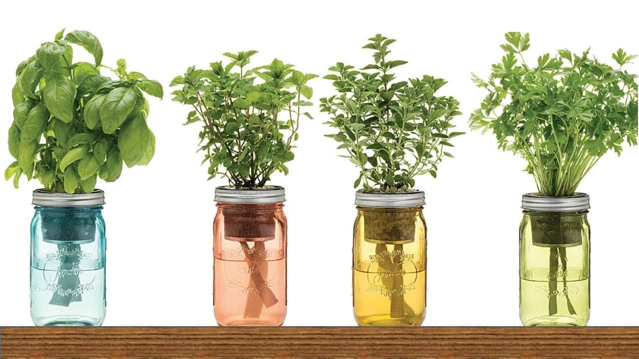 9 herbs you can grow in water over and over again for - Best herbs to grow indoors ...