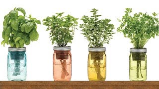 If you have a glass jar and access to fresh water, you can grow a s...
