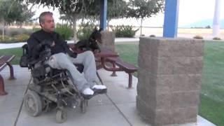Doberman Pinscher Breeders - Doberman Pinscher Scottsdale Az | Ava | Www.azworkingdogs.com